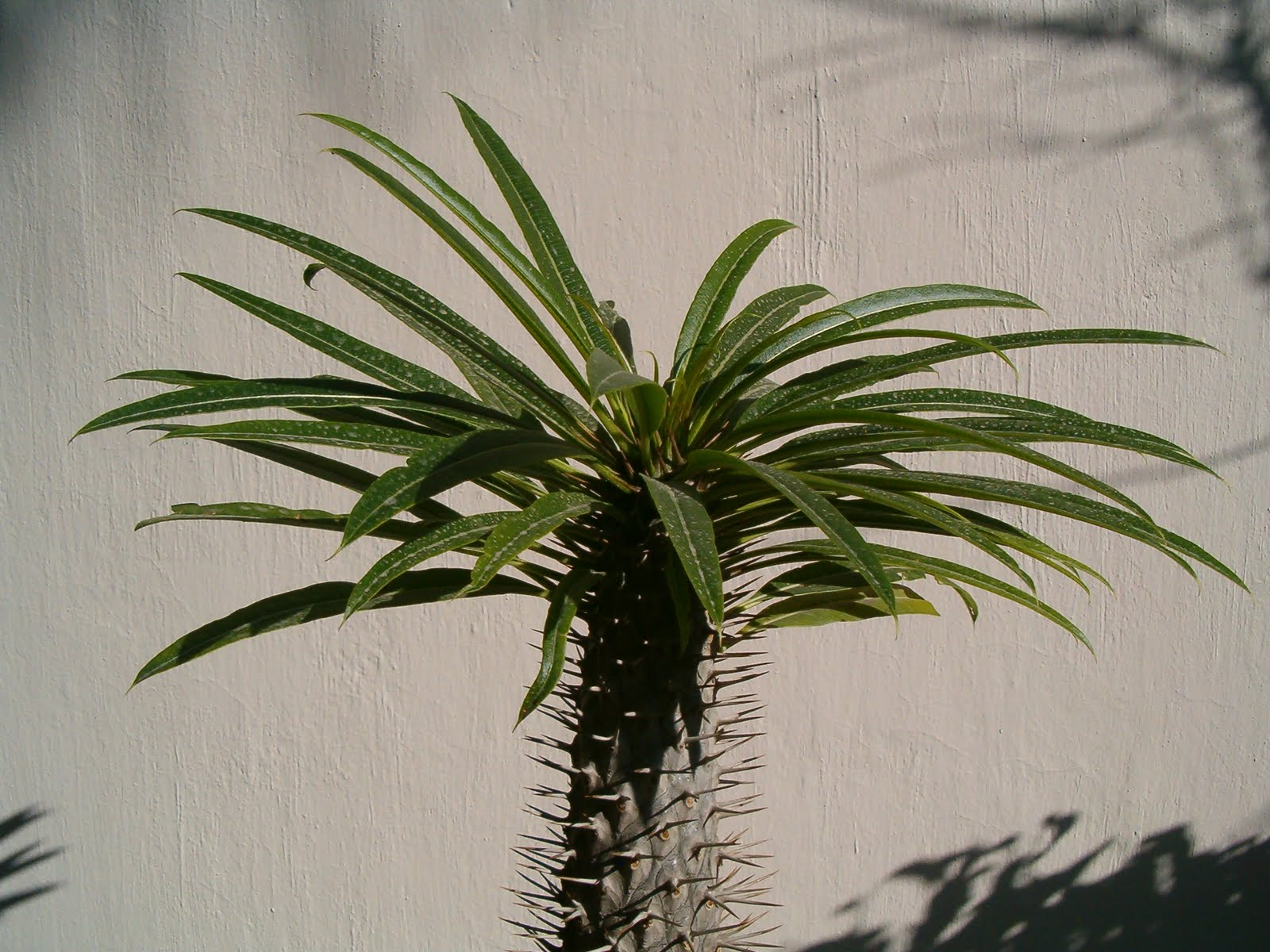 Sancarlosfortin plantas exoticas en zapopan jalisco for Plantas exoticas de interior