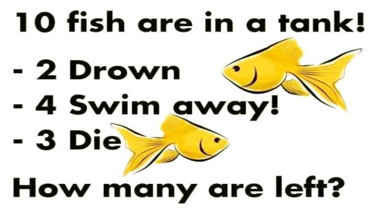 European relocation services theres something fishey for 10 fish are in a tank riddle answer