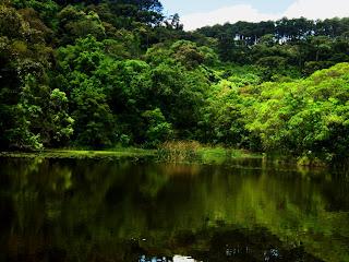 O Belo Lago das Carpas - Parque da Cantareira