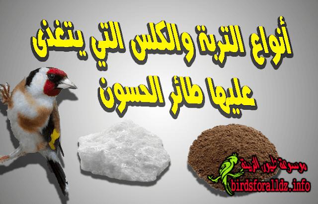 نوع التربة والكلس التي يتغذى عليها طائر الحسون