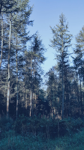 Picture of trees at Cannock Chase ANOB