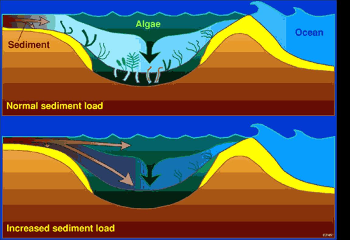 Pengertian Sedimentasi & Jenis Sedimentasi Fluvial, Aeolis dan Marine