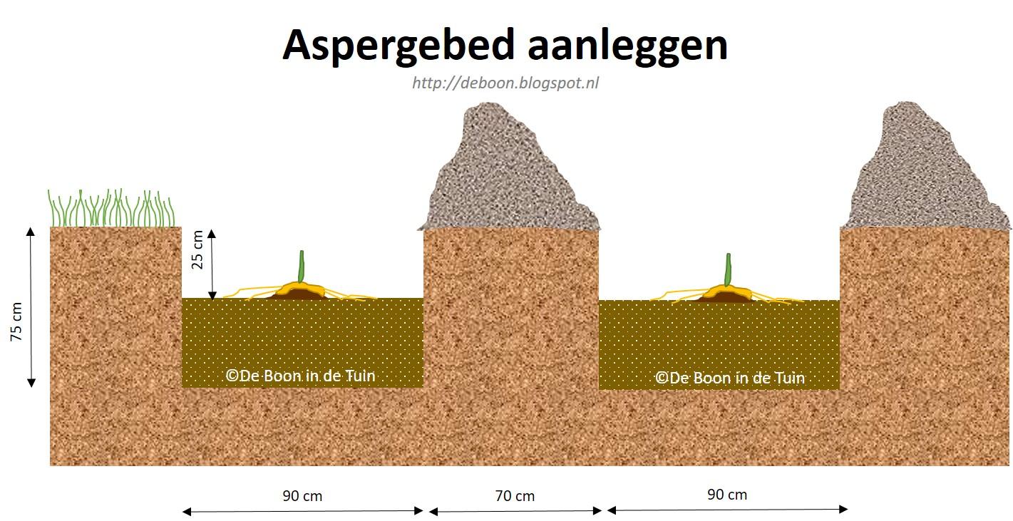 asperges aspergebed aanleggen afmetingen moestuin