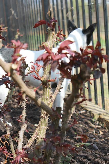 Making spring gardening plans in Texas.
