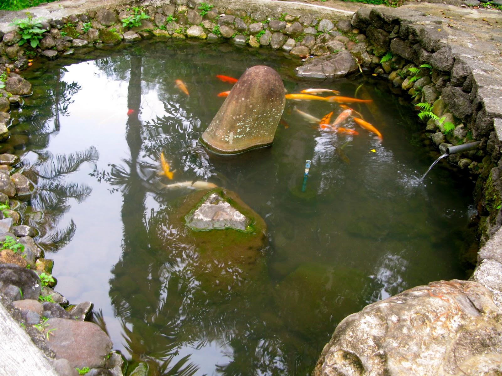 Walk with cham retreat at montegelo farm bukidnon for Koi pool fleetwood