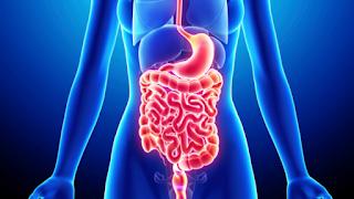 http://www.leakygutcurereview.org/leakygutsyndrome-diet.html