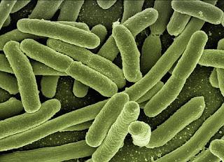 bakteri-www.healthnote25.com