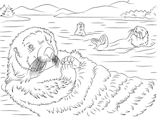 Old otter Swim At The Beach - Coloring Pages Animals