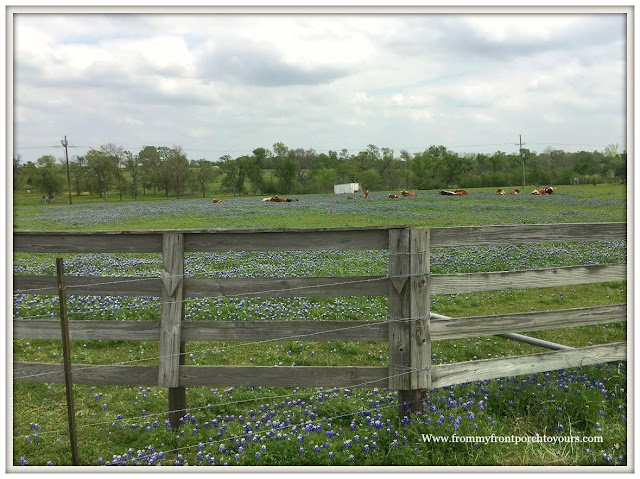 Texas Bluebonnets-Wildflowers-Field-Old Fence-From My Front Porch To Yours