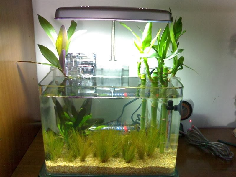 All about betta fish: January 2014