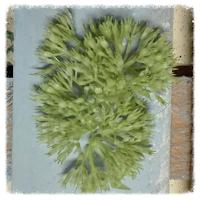http://www.foamiran.pl/pl/p/srodki-do-kwiatow-jasno-zielone/810