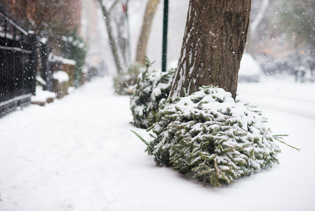 vánoční_stromečky_Brooklyn
