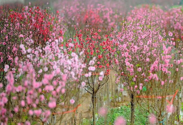 The Unique Flowers of North Vietnam Spring 2