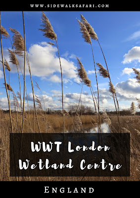 WWT London Wetland Centre