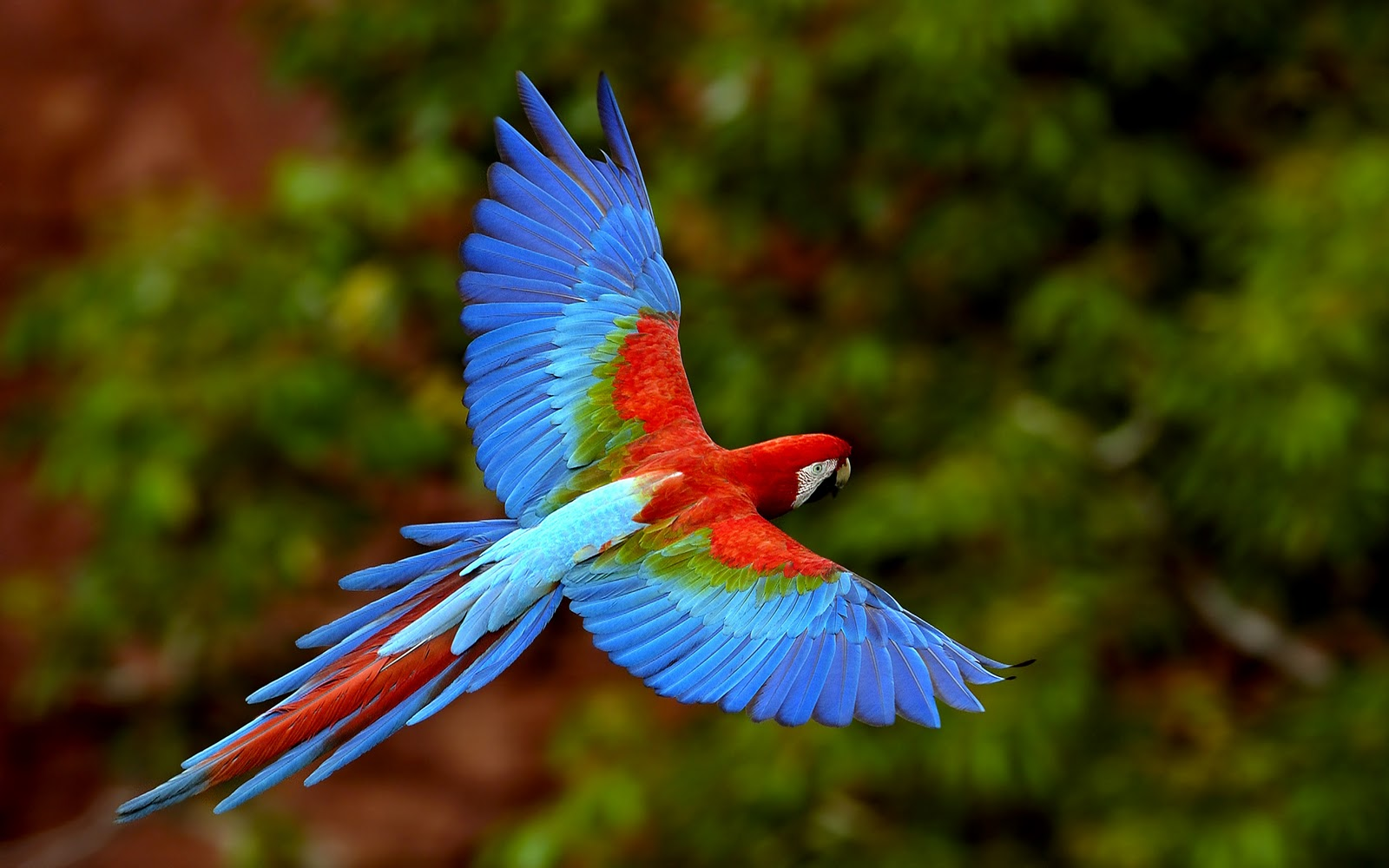 Funny Image Collection Blue Fronted Amazon Birds