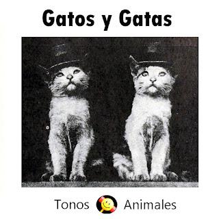 Gatos y gatas maullando. En la imagen, una fotografía en blanco y negro de un gato y una gata con sombrero de copa