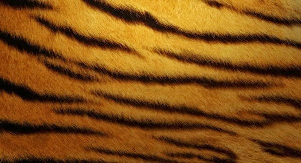 Tiger Skin Wallpapers for Samsung Galaxy Note 3