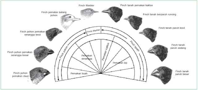 Macam-macam paruh burung finch