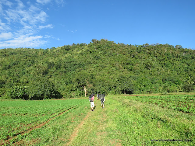 Rice fields at Barangay Cuyambay