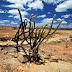 Gestores discutem combate à desertificação no Nordeste