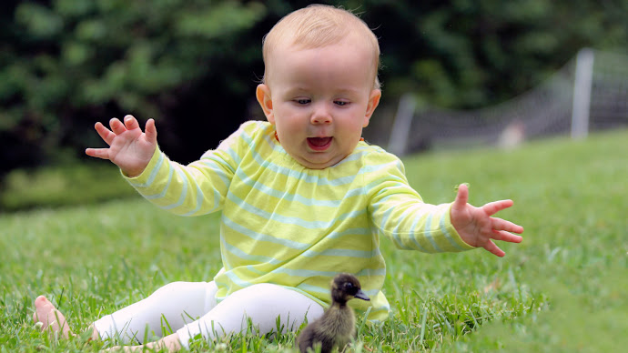 Wallpaper: Baby and the Little Duck