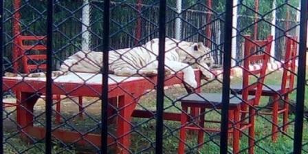 Wisata Maharani Zoo  wisata maharani zoo lamongan