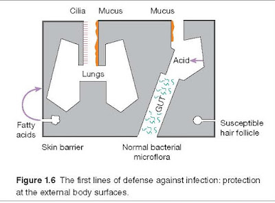 External Barriers Against Infection