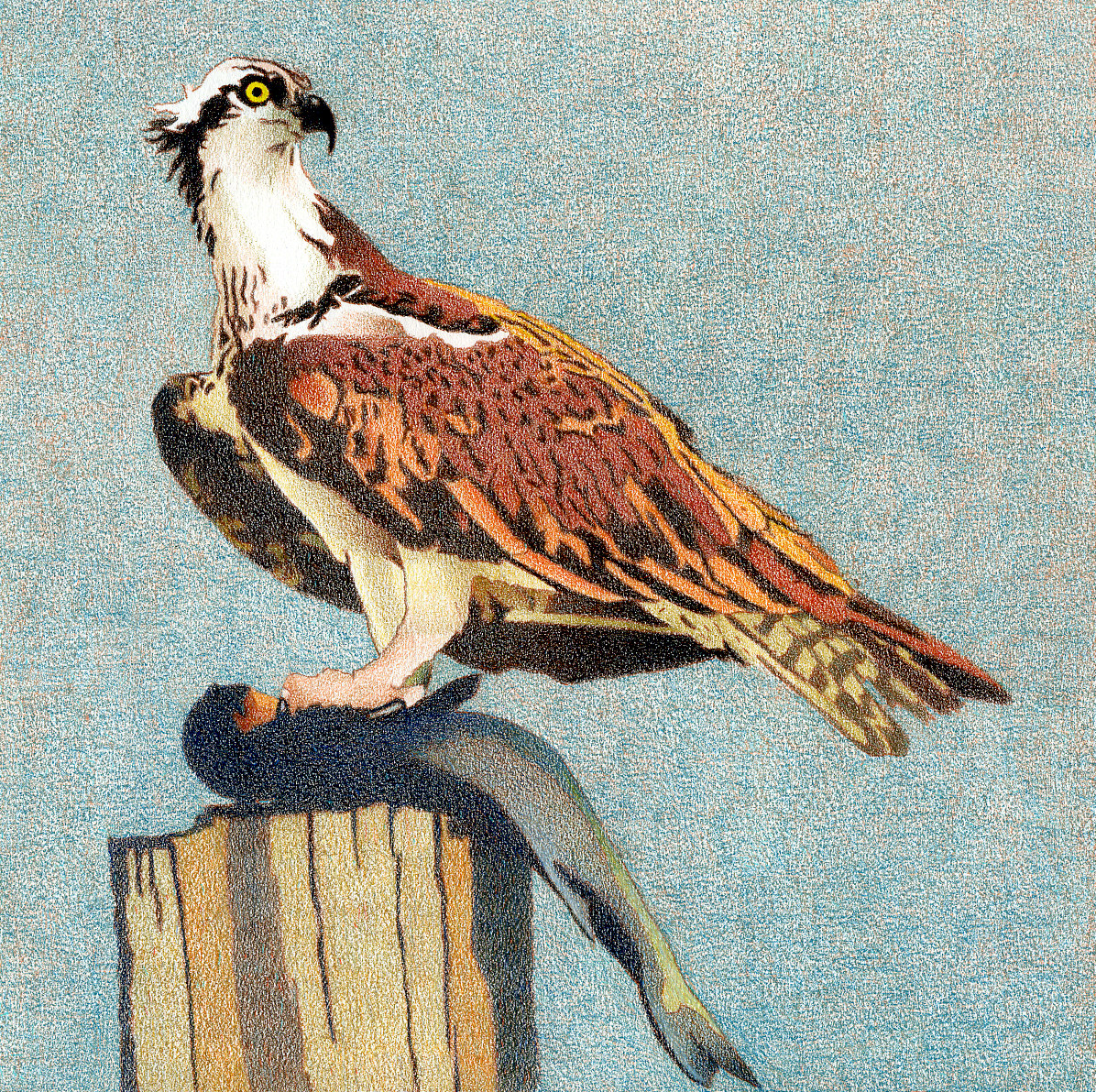 Impression Evergreen: Birds in Art - Colored Pencil Drawings