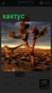 В пустыне стоит одинокое дерево с колючками на ветках и кактусы вокруг