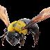 Tubes de insectos, moscas, mosquitos, escarabajos, abejas...