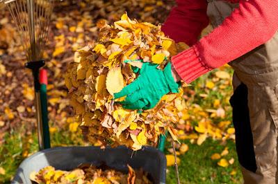 travaux jardinage novembre