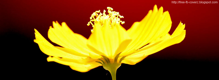 Yellow Flower FB Cover
