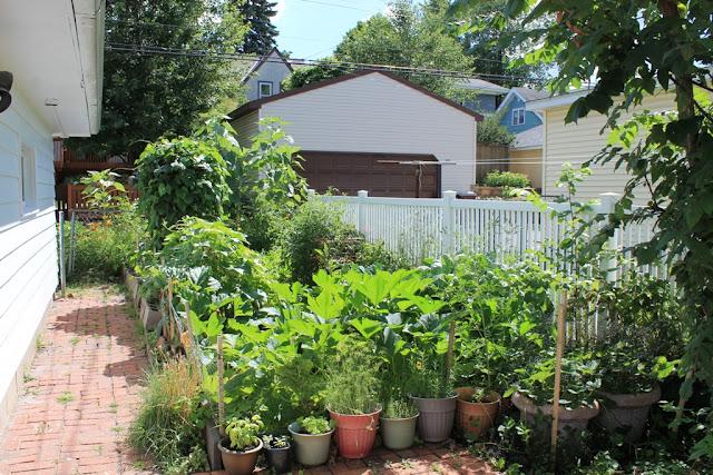 Our garden at three months (Aug. 10, 2015).