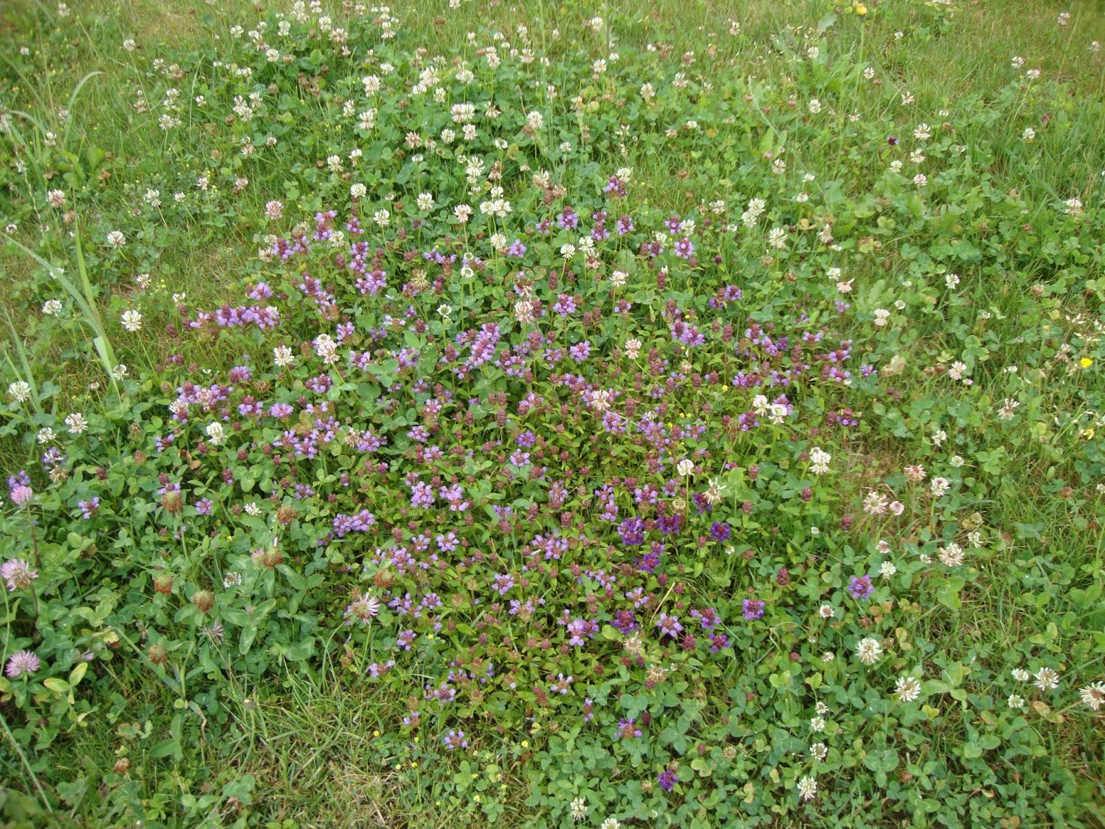 Un piccolo giardino in citt un campo di fiori in giardino for Prato inglese a rotoli