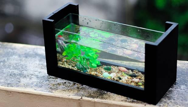 Benefits Of Fish Aquarium At Home In Hindi घर म