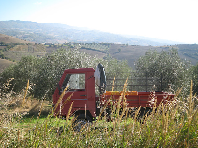 Transporting olives, Southern Tuscany
