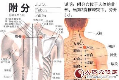 附分穴位 | 附分穴痛位置 - 穴道按摩經絡圖解 | Source:xueweitu.iiyun.com