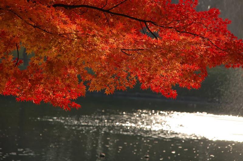 Работы фотографа под ником suika2006