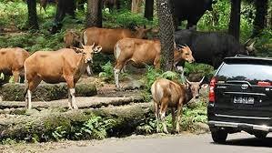http://www.bromomalang.com/2015/02/paket-wisata-bromo-taman-safari-prigen.html