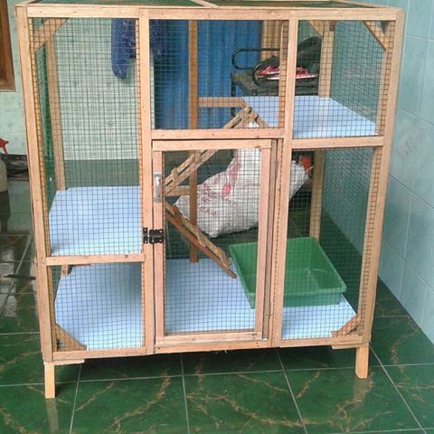 Kandang Kucing Anggora Besar Majalah Cat Dog
