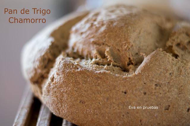 Bread recipe, bread dough