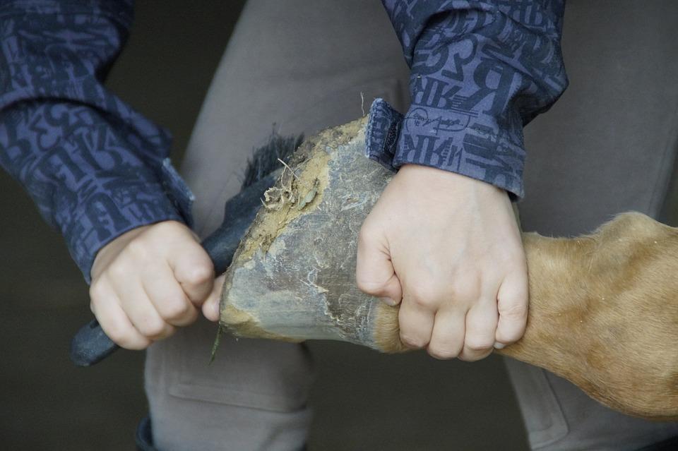 Treating Thrush in Horses | Savvy Horsewoman | DIY Horse Care