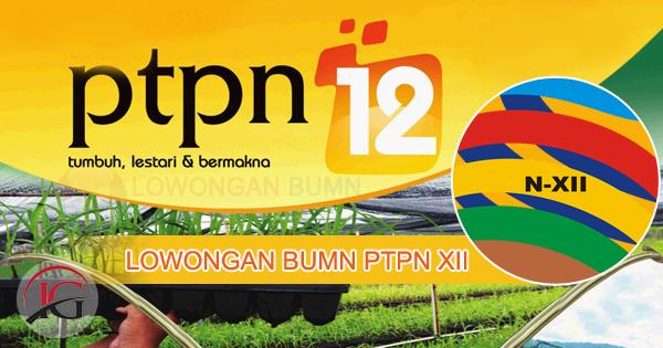 Lowongan BUMN PT Perkebunan Nusantara XII