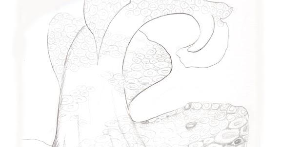 Jewel Renee Illustration: Wobbegong (Carpet) Shark Pencil ...