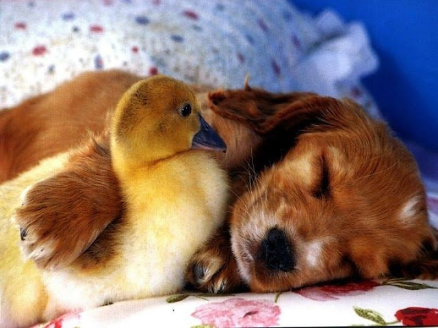 Best friends - A little bird & dog