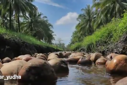 Wisata Kebun Kelapa Guntung, Indragiri Hilir