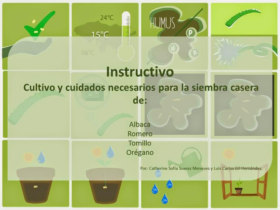 Cultivo hierbas aromaticas en casa - Cultivo de hierbas aromaticas en casa ...