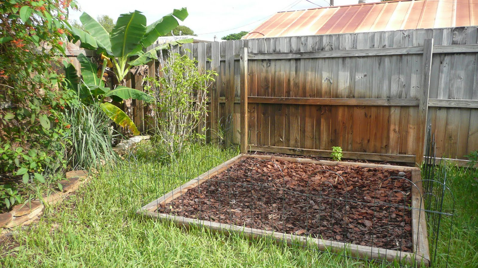 Gardening south florida style south florida vegetable - South florida vegetable gardening ...