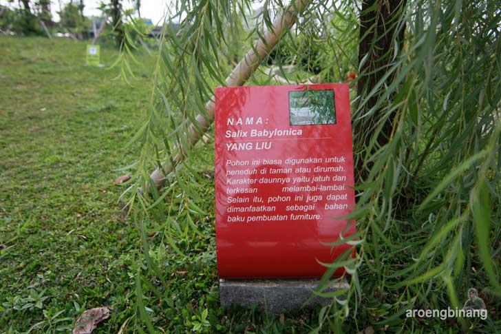 pohon yang liu taman kota ria rio jakarta