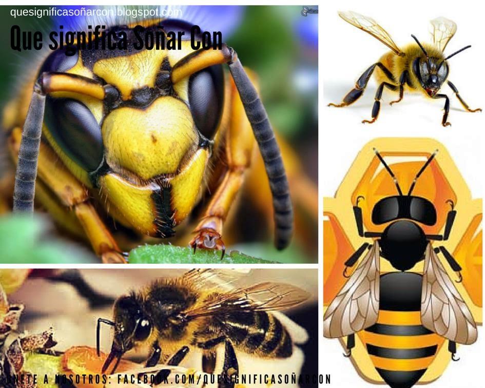 cual es el significado de soñar con insectos - http://xn--quesignificasoarcon-83b.blogspot.com/2013/07/que-significa-sonar-con-abejas.html